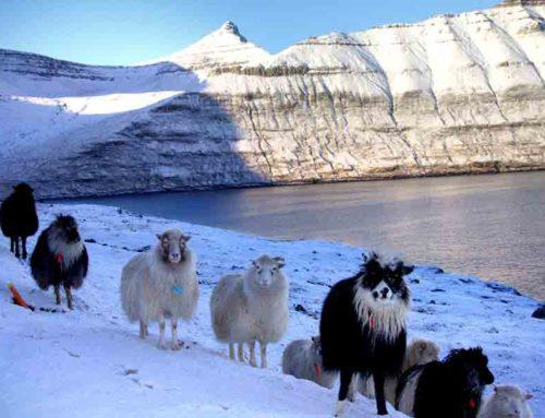 Sheep paintings at Koks 2-star Michelin restaurant